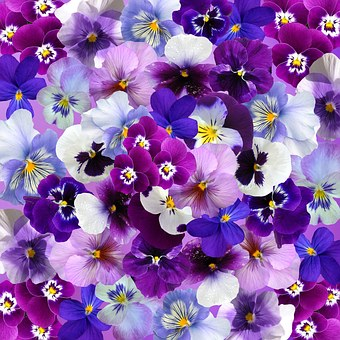 Graphic Background Pansy Easter Sprin