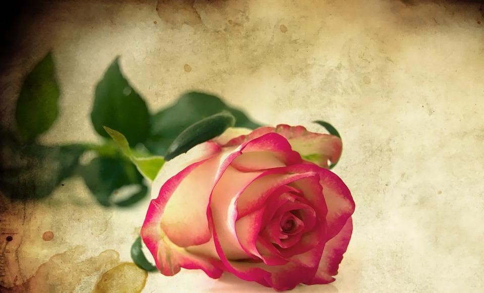 Cuore, Rose, Perdere, Petali, Rosso, Fiore