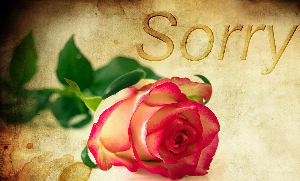Rosa, Sfondo, Mi Scusi, Rosa Rossa, Chiedo Scusa
