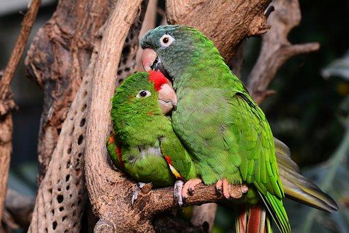 Parrot Parrots Green Lovebirds Bird Animal