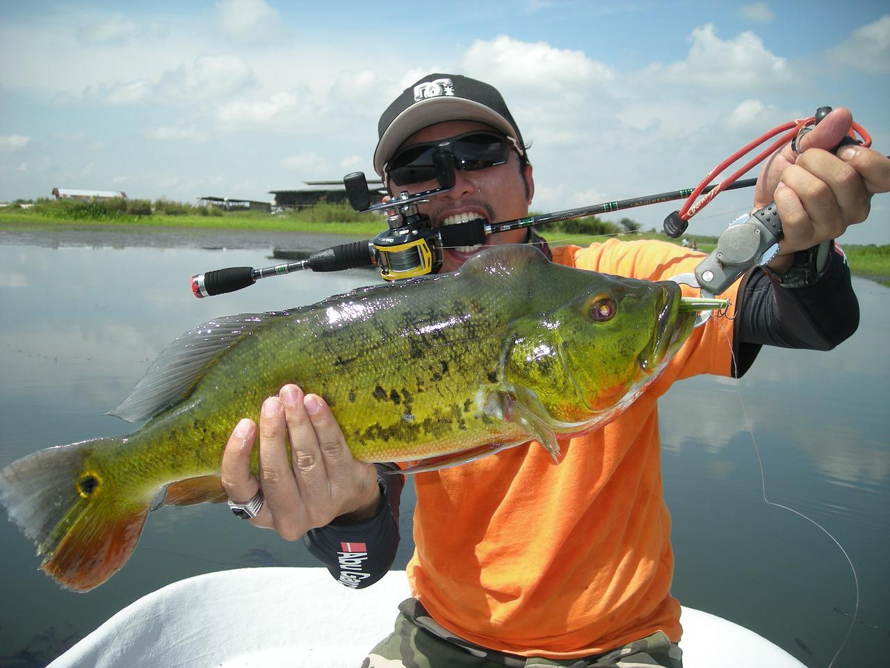 Invasive Peacock Bass: The Hazard in Foreign Waters