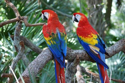 Macaw, Red, Parrot, Bird, Colorful, Big