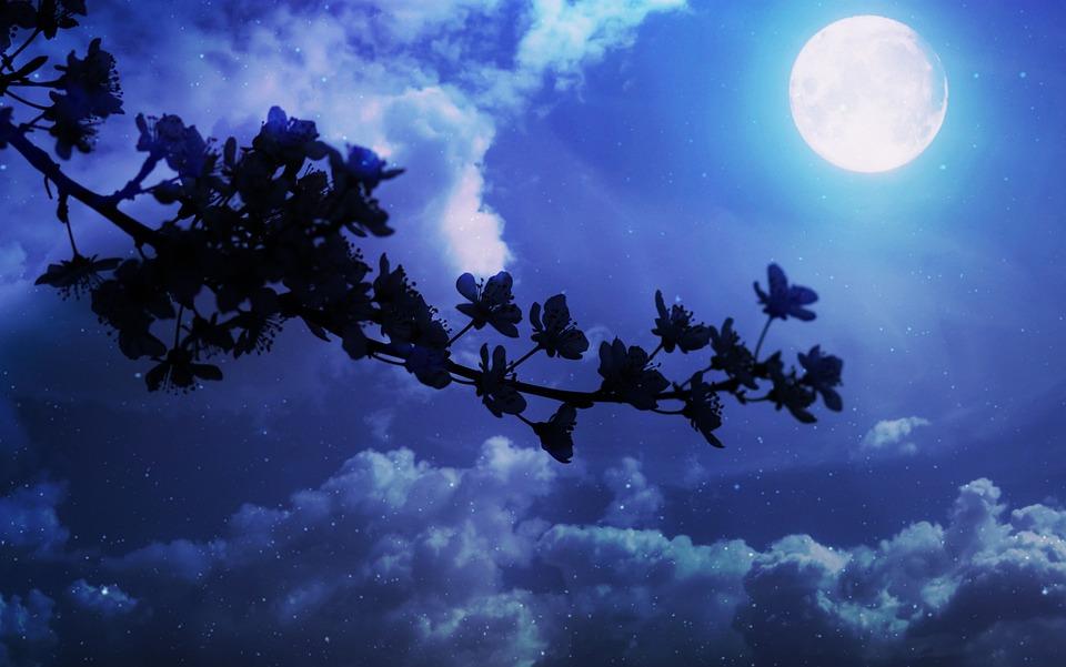 Flowers, Casey, Spring, Luna, Night, Cloud, Shadow