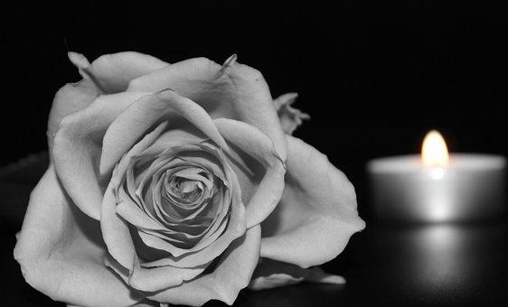 バラ, 花, 満開のバラ, 白黒, キャンドル, キャンドルライト, 喪, 慰め