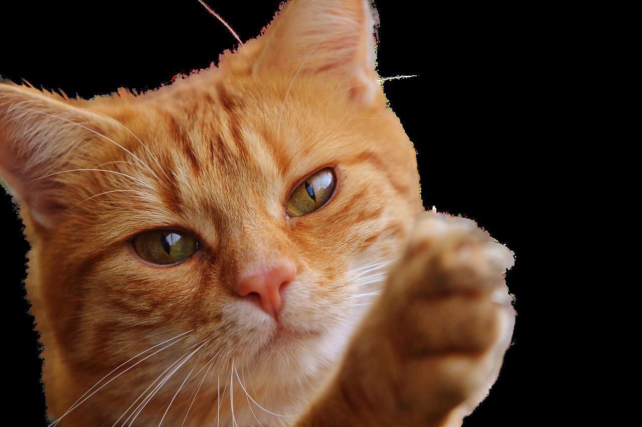 Katze Video Tierarzt