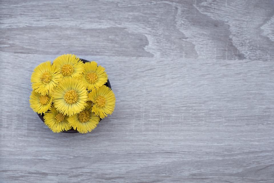 Leskenlehti, Kukka, Kukat, Keltainen, Keltainen Kukka