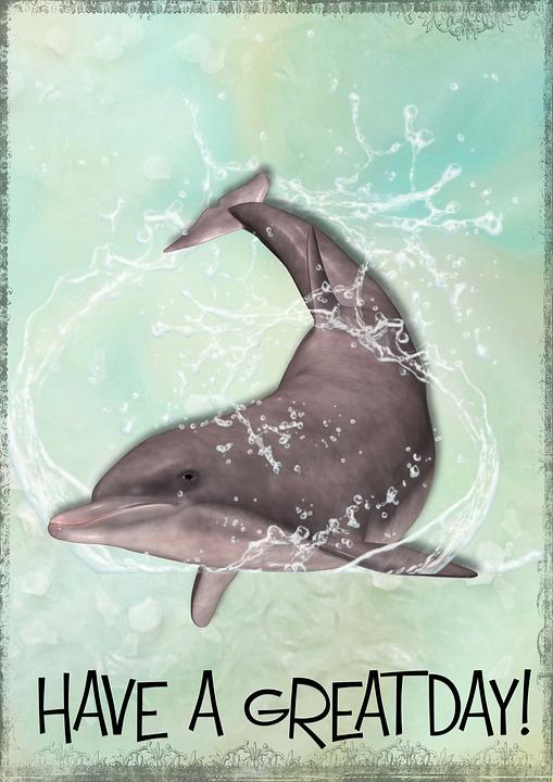 Delfiinien dating site