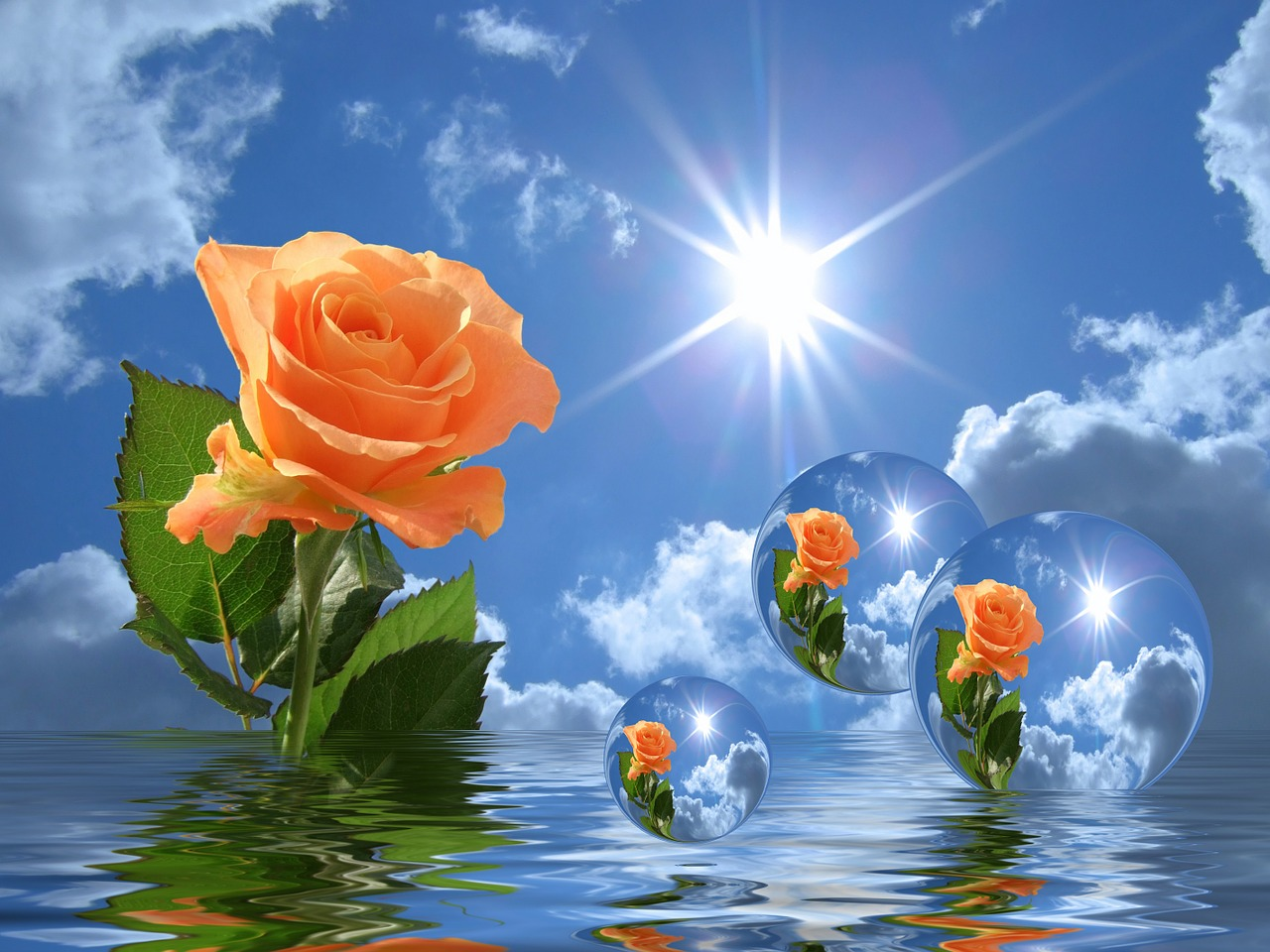 Цветы на воде анимация