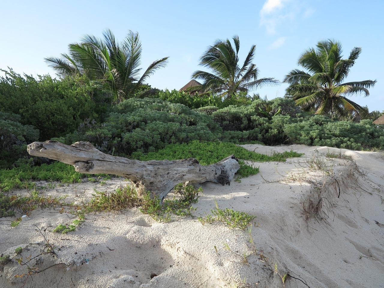 участок пляжи юкатана фото людей продолжается