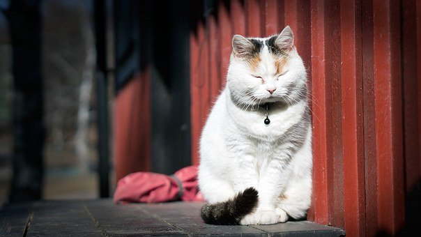 Cat, Kitten, Animal, White, Sitting, Pet