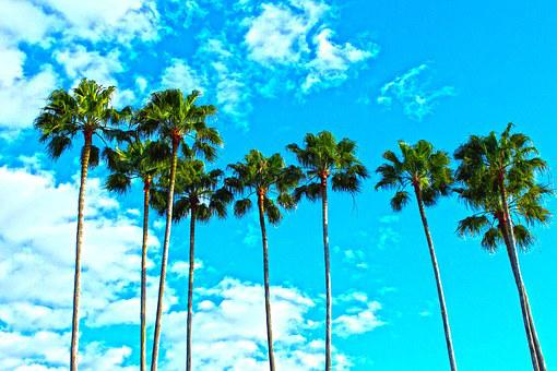 Palm Trees, Florida, Tropical, Sky, Blue