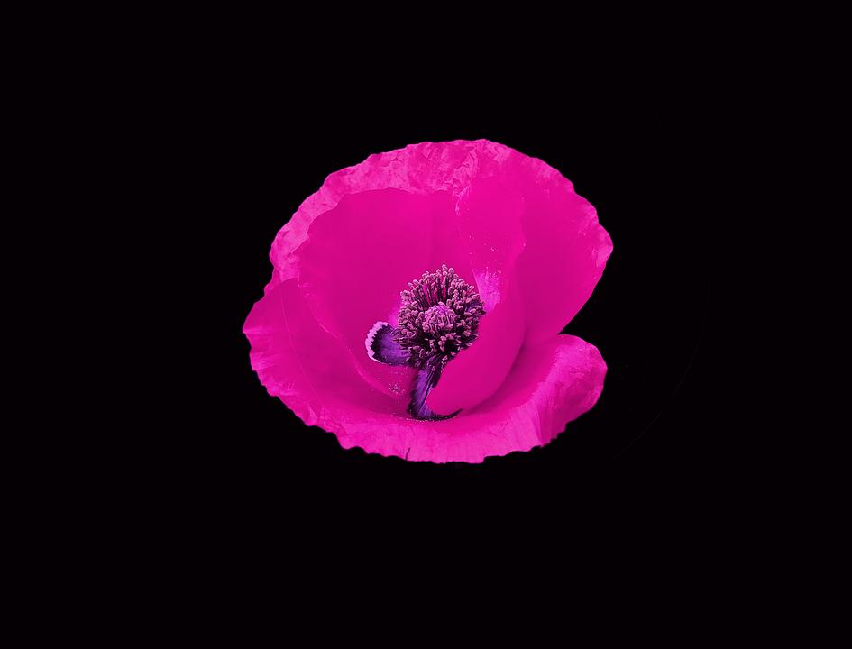 Flower artistic pink black free photo on pixabay flower artistic pink black background elegant mightylinksfo