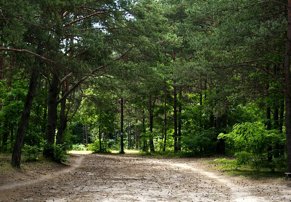 Free Photo Forest Tree Way Sand Green Free Image On