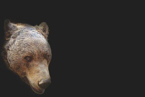 Diário dos Sonhos Lúcidos de Emerson Pawoski - Página 23 Bear-1279108__340