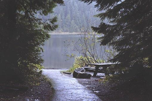 Trees, Water, Lake, Nature, Outdoor