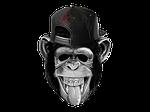 monkey, laugh, funny