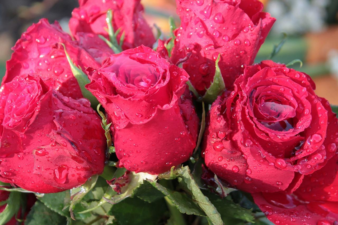 Любовью английском, открытка роза в росе