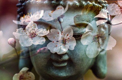 Bouddha, Fleur, Bouddhisme, La Religion