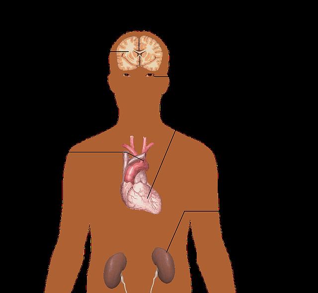 Anatomy Of The Human Body Big Free Image On Pixabay