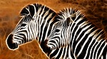 animal, stripes, animals