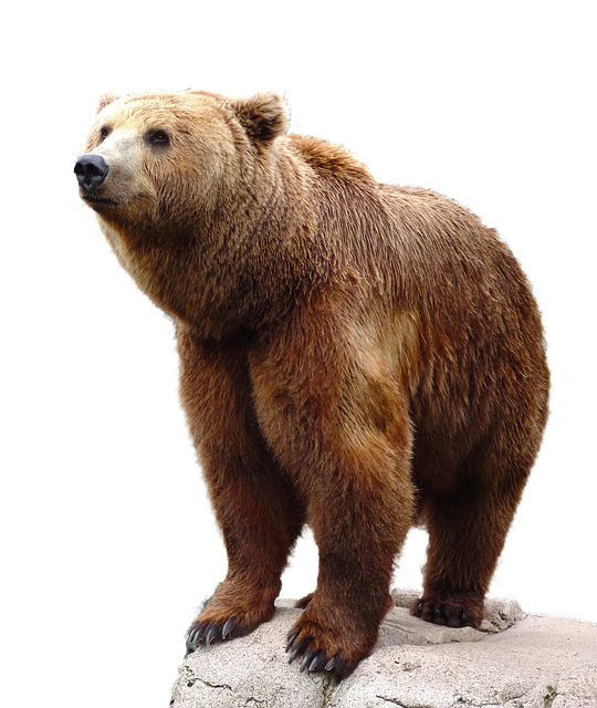 Https Pixabay Com En Wild Brown Bear Nature Animal 1280149