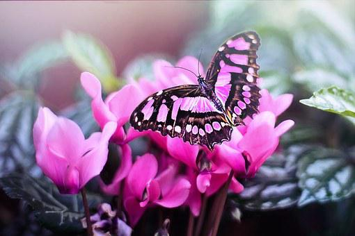 Pink Butterfly Butterfly Pink Flowers Pink