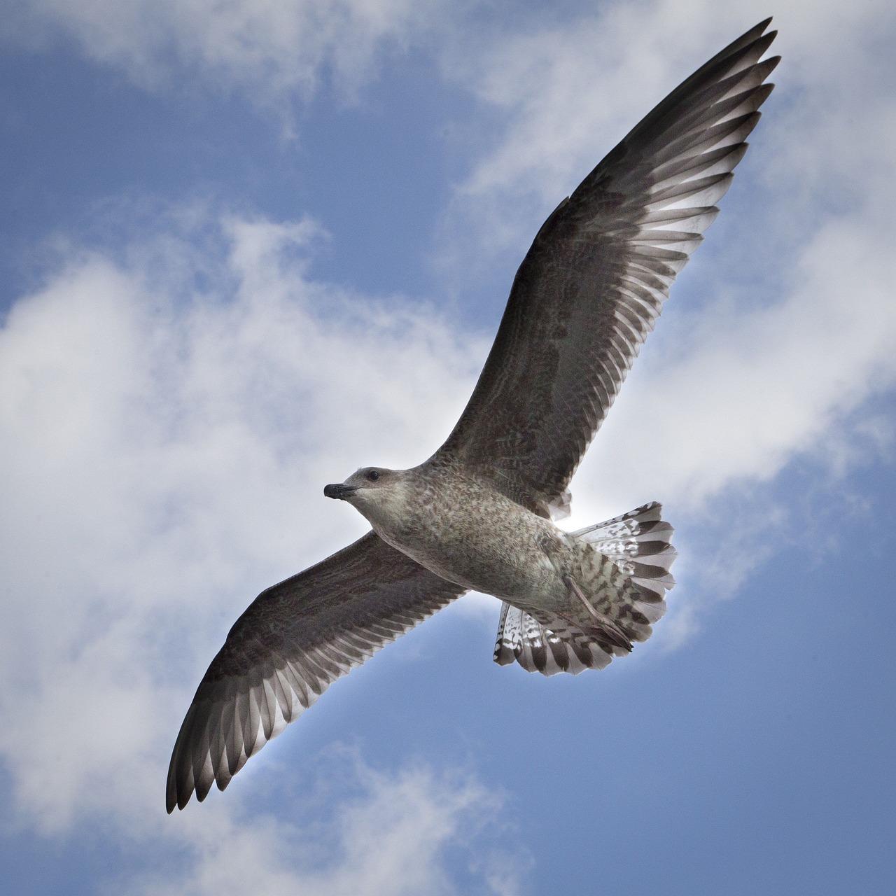 картинки летящих птиц первый опыт работы