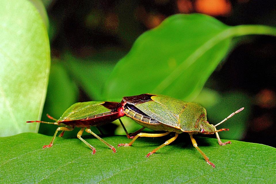 foto gratis coleotteri macro insetti foglia immagine. Black Bedroom Furniture Sets. Home Design Ideas