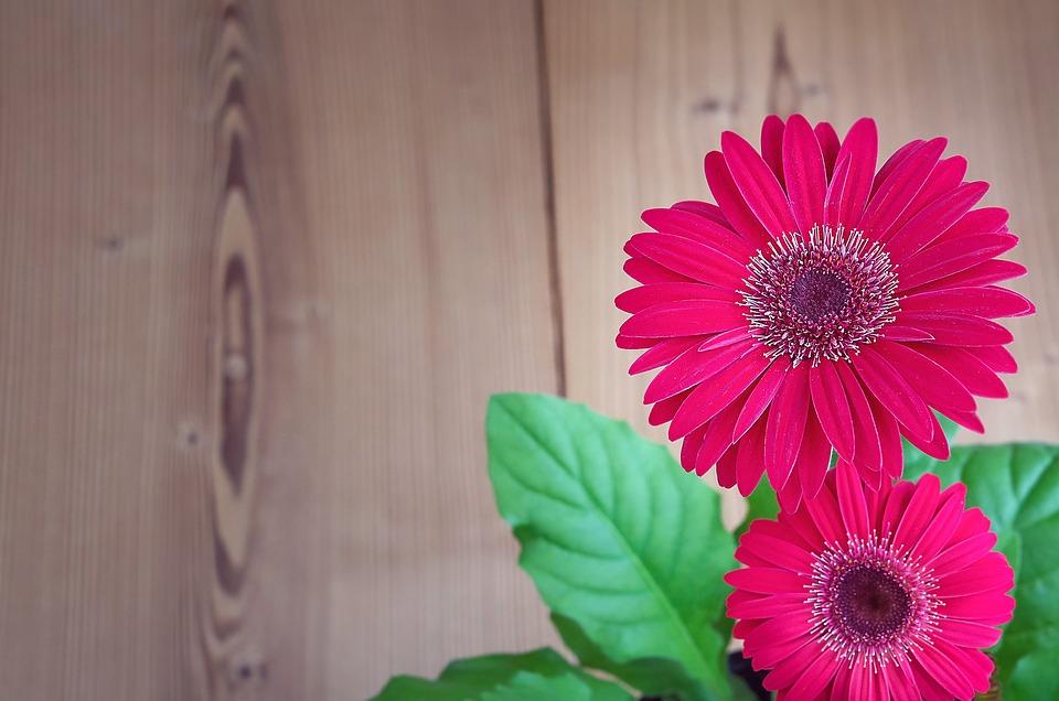 Rose Gerbera Images Pixabay Telechargez Des Images Gratuites