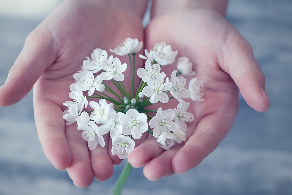 花, 小さな花, 白, 白い花, スプリング, 入札, 手, 手の中, 維持, 気を付けて, 慎重に