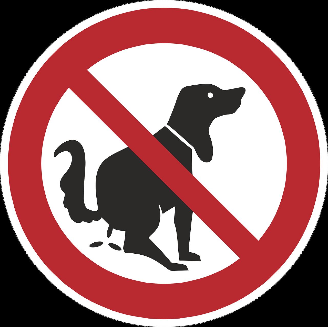 Преподавателям картинки, смешная картинка с собаками гулять запрещено
