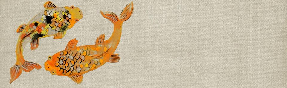 Free illustration koi fish gold fish animals free for Black and gold koi fish