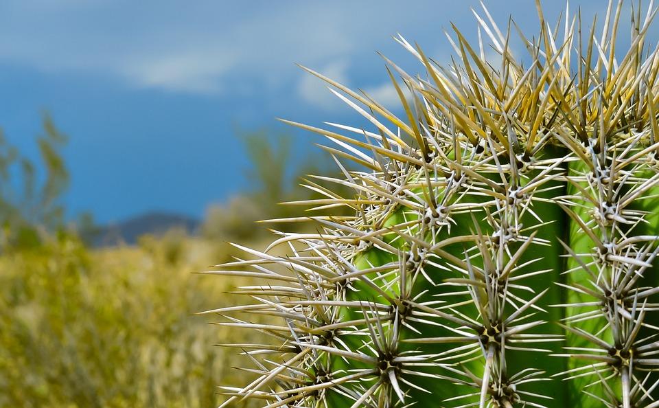 Natureza deserto planta foto gratuita no pixabay - Potus planta de mala suerte ...