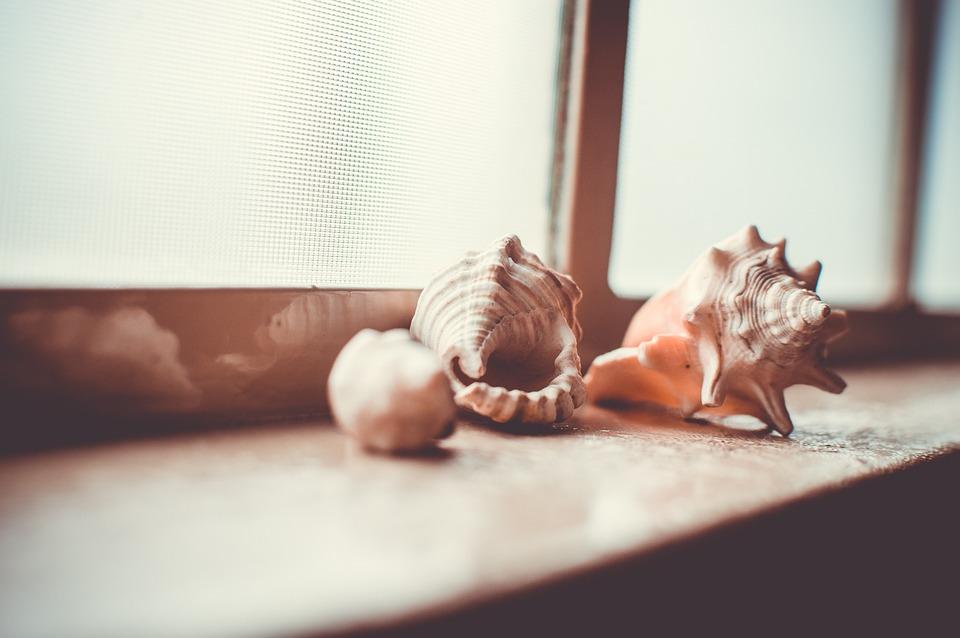 シェルフ, コレクション, シェル, 窓辺, 軟体動物