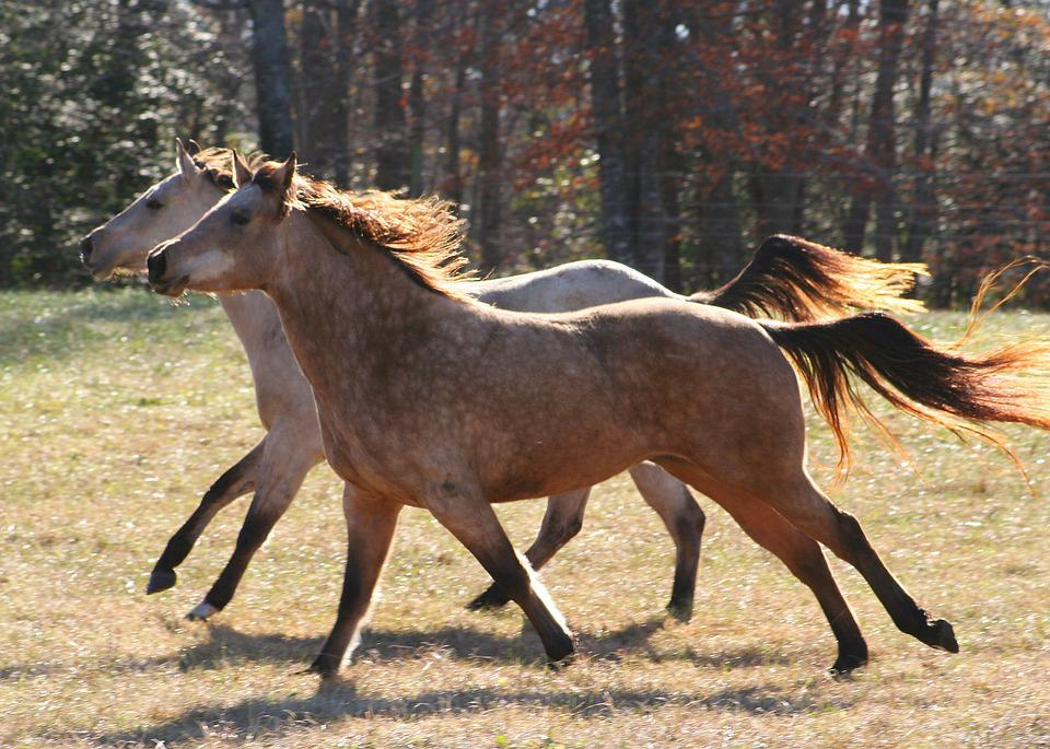 wild horse online dating Internet adoption program: online adoption gallery how to adopt from the we are very excited to announce the launch of the new wild horse and burro online corral.