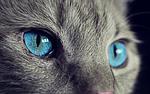 kot, zwierząt, cat's eyes
