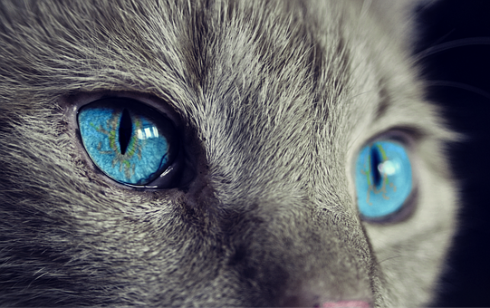 Cat, Animal, Cat'S Eyes, Eyes, Pet, View