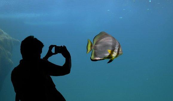 Silhouette Bat Fish Aquarium Contrast