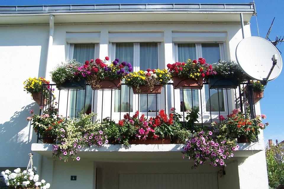 Balcon fleur fleurs dété