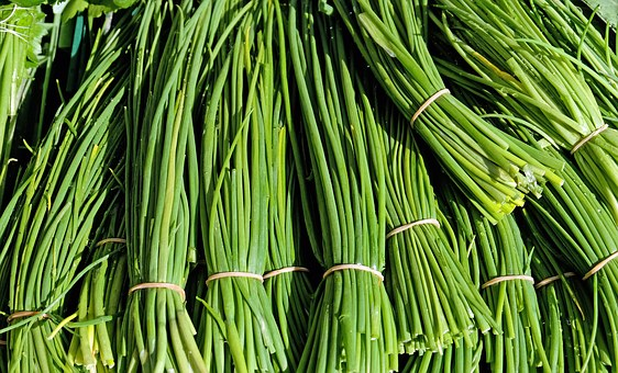 Chives Herbs Culinary Herbs Plant Nature C