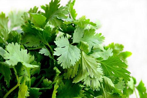 Cilantro, Herbs, Food, Green, Cuisine