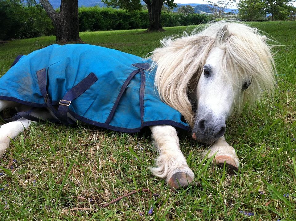 91 Koleksi Gambar Binatang Kuda Poni HD Terbaru