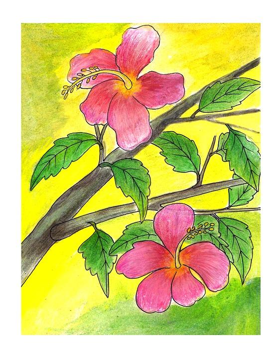 Gambar Ilustrasi Tanaman Bunga Kembang Sepatu Ilustrasi Bunga Gambar Gratis Di Pixabay