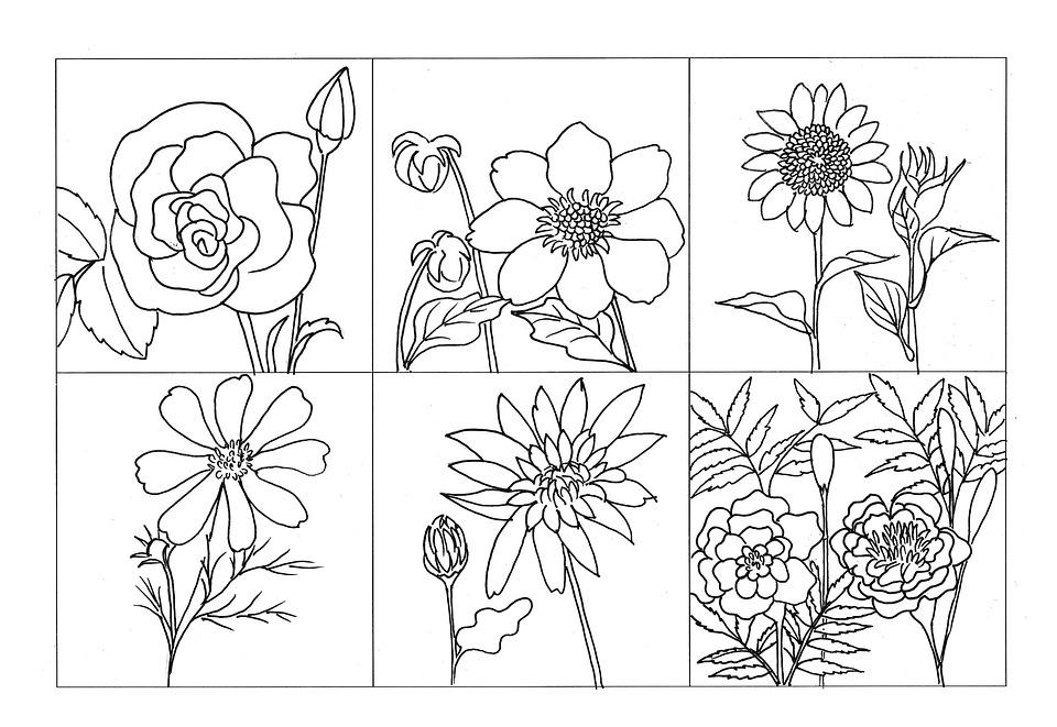 Dibujos Para Colorear De Flora: Coloring Flower Plant Rose · Free Image On Pixabay