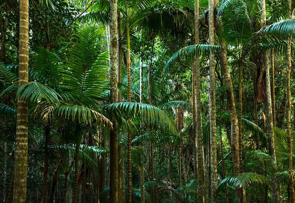Photo Gratuite: Jungle, Forêt Tropicale Humide