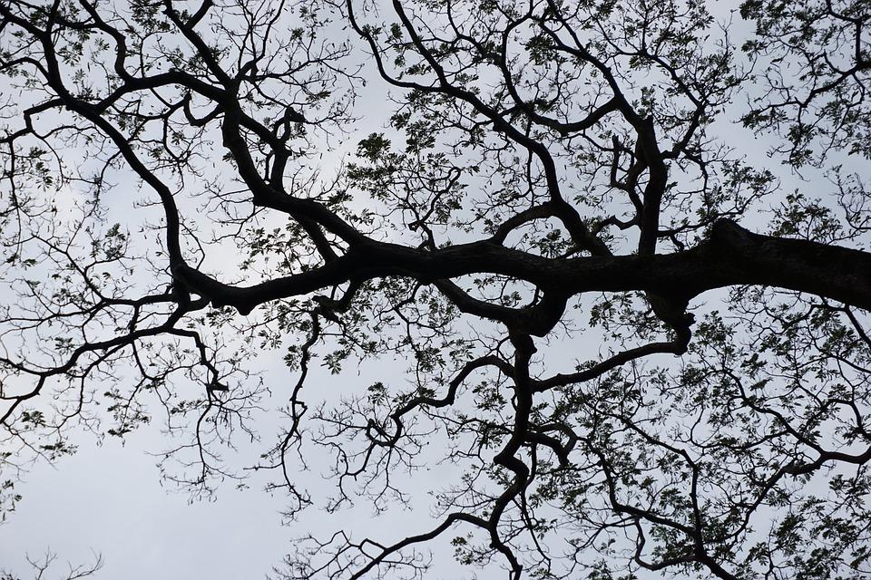 arbre ciel arbre ciel contraste silhouette de larbre - Arbre Ciel