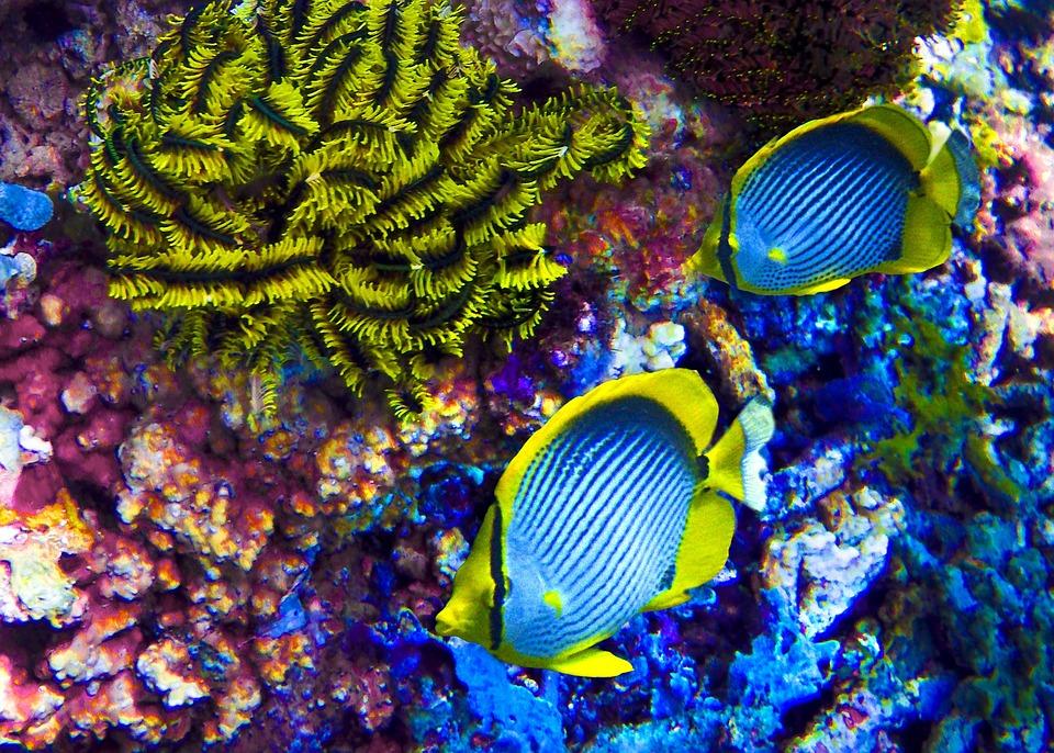 Neon Fish, Ocean, Fish, Neon, Underwater, Sea, Water