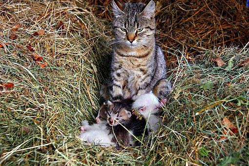 Cat, Kittens, Animals, Cute, Family