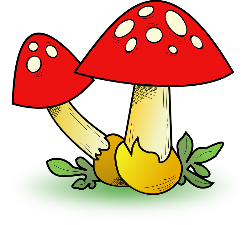Free vector graphic: Fall, Fungi, Map Icon, Mushroom - Free Image on ...