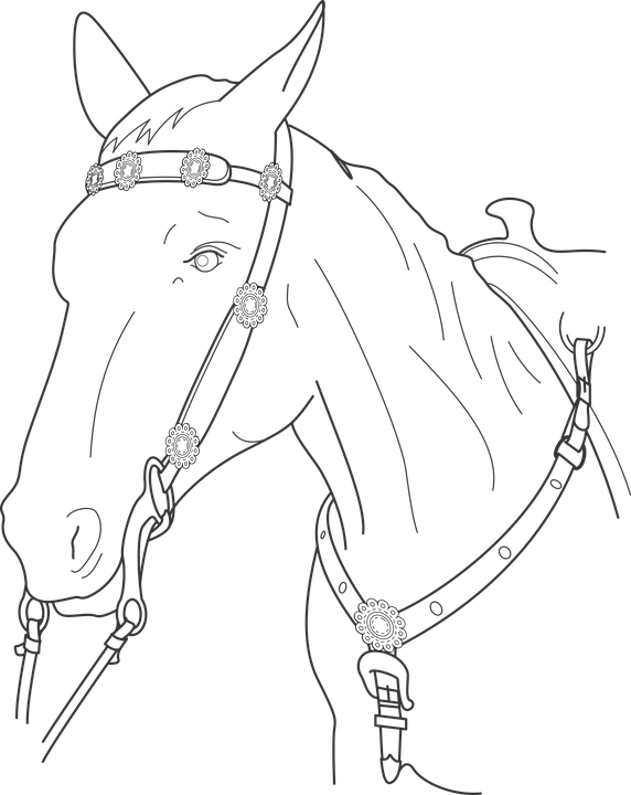 Horse Head Animal Free Vector Graphic On Pixabay